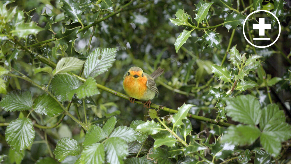 Visual effects still of a robin from BBC's Worzel Gummidge, VFX produced by Sparkle VFX